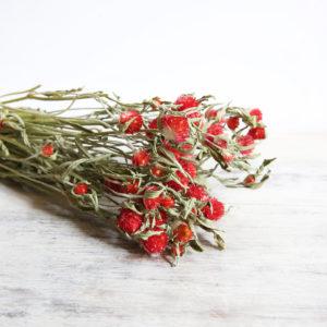 fleurs-séchées-à-la-botte-gomphena-rouge-origine-atelier-floral