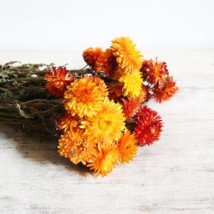 fleurs-séchées-à-la-botte-hhelichrysum-jaune-orange-origine-atelier-floral