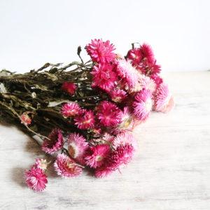 fleurs-séchées-à-la-botte-hhelichrysum-rose-origine-atelier-floral.JPG