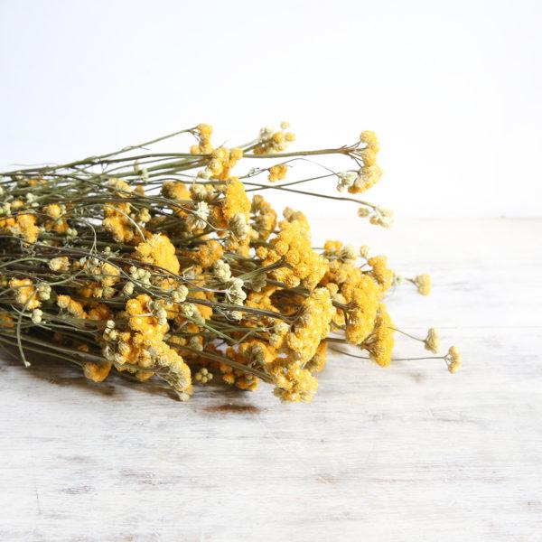 fleurs-séchées-à-la-botte-lona-jaune-origine-atelier-floral