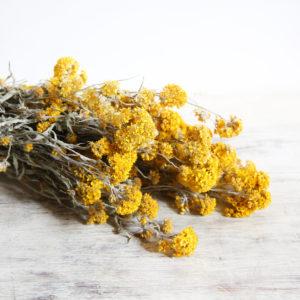 fleurs-séchées-à-la-botte-sanfordi-jaune-origine-atelier-floral