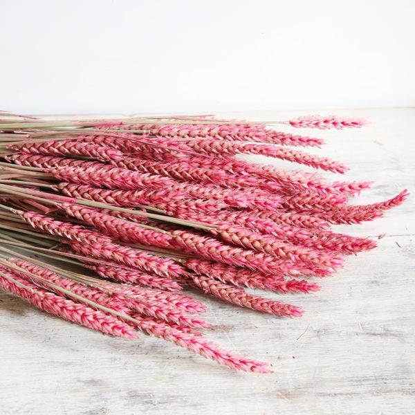 fleurs-séchées-à-la-botte-triticum-rose-origine-atelier-floral
