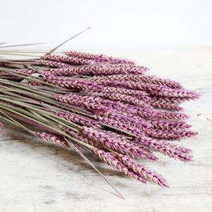 fleurs-séchées-à-la-botte-triticum-violet-origine-atelier-floral